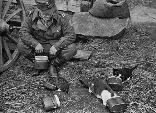 Click image for larger version.  Name:Finnish+Soldier+and+Kittens+WWII.jpg Views:934 Size:231.2 KB ID:598256