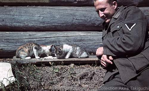 Click image for larger version.  Name:Heer soldier with cat in color.jpg Views:2480 Size:121.3 KB ID:598261