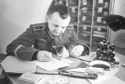Click image for larger version.  Name:Old-pics-of-cats-and-soldiers16.jpg Views:119 Size:67.8 KB ID:598382