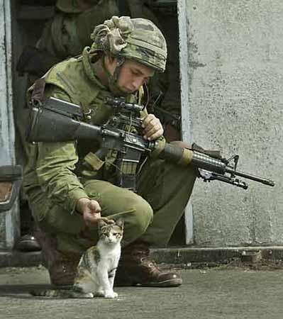 Name:  soldier_cat.jpg Views: 299 Size:  23.6 KB