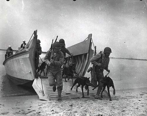 Click image for larger version.  Name:War-Dogs-training-Camp-Lejeune-ca.-1943.jpg Views:44 Size:96.3 KB ID:598387