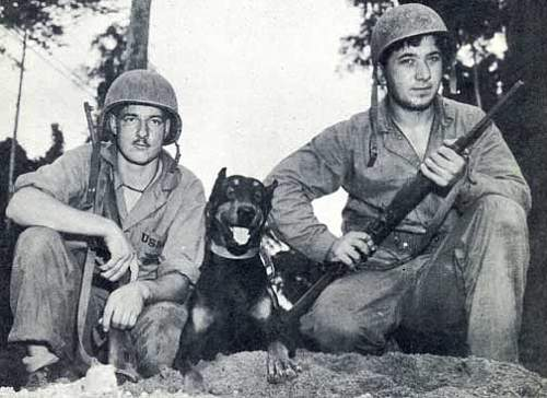 Click image for larger version.  Name:wdjack72Doberman_Pinscher_Jack_at_Bougainville_WWII_Photo.jpg Views:30 Size:46.6 KB ID:598388