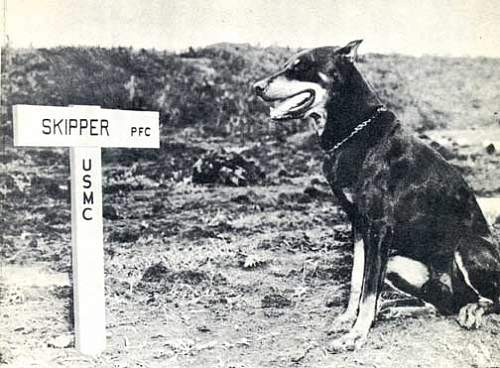 Click image for larger version.  Name:wdskip72Doberman_Marine_War_Dog_Butch_Guam_Grave_WWII_Photo.jpg Views:51 Size:55.6 KB ID:598389