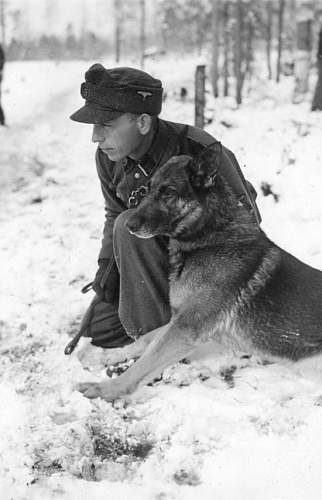 Click image for larger version.  Name:SS and dog.jpg Views:60 Size:126.5 KB ID:598620