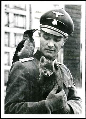 Click image for larger version.  Name:ss with cat and bird.jpg Views:425 Size:79.1 KB ID:598631