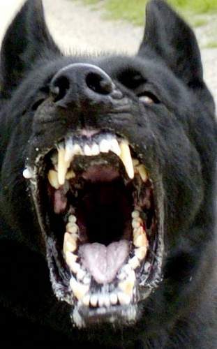 Click image for larger version.  Name:dog_attack2.jpg Views:88 Size:55.9 KB ID:72695