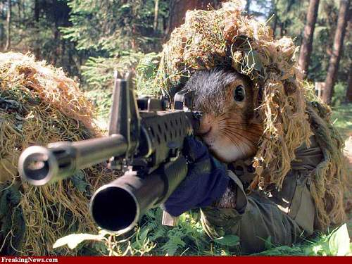 Click image for larger version.  Name:2985281-sniper-squirrel-30002.jpg Views:26 Size:70.4 KB ID:808616