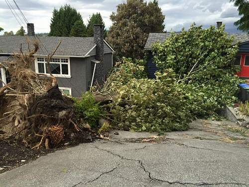 Click image for larger version.  Name:trees-down-in-Port-Coquitlam.jpg Views:26 Size:122.8 KB ID:877472