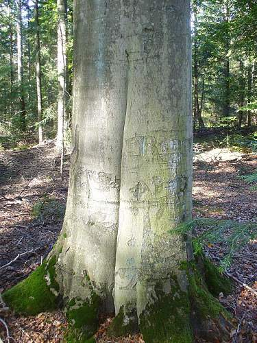 Trees of partisans