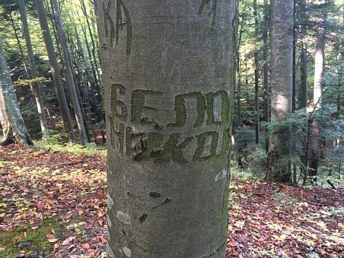 Possible russian engraving on a tree from trench area