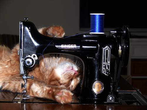 Click image for larger version.  Name:sleeping sewing machine kitty.jpg Views:47 Size:138.7 KB ID:463220