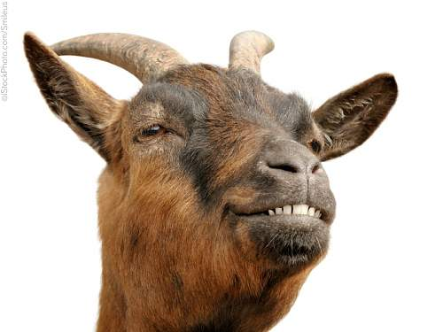 Click image for larger version.  Name:goat_2D00_list_2D00_4.jpg Views:13 Size:120.6 KB ID:813309