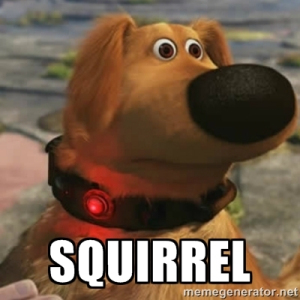 Name:  squirrel.jpg Views: 29 Size:  64.0 KB