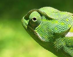Name:  chameleon3.jpg Views: 137 Size:  9.4 KB