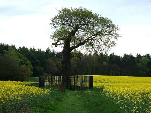 Click image for larger version.  Name:royal oak..jpg Views:18 Size:149.2 KB ID:851801