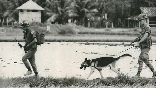 Click image for larger version.  Name:199th LIB 2nd of the 3rd Inf. 49th IPSD scout dog and handle.jpg Views:58 Size:53.5 KB ID:971430