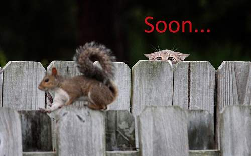 Click image for larger version.  Name:soon-squirrel.jpg Views:155 Size:188.5 KB ID:399503