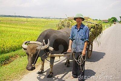 Name:  vietnamese-peasant-returning-harvest-19703592.jpg Views: 567 Size:  36.1 KB