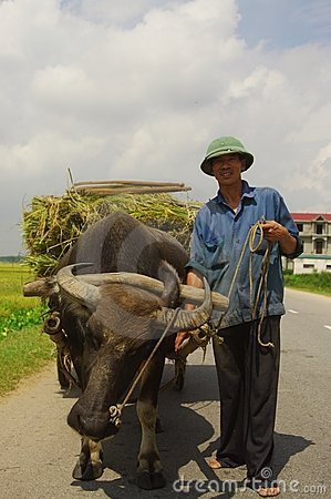 Name:  vietnamese-peasant-returning-harvest-19703747.jpg Views: 540 Size:  34.7 KB
