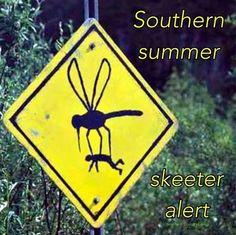 Summer time pest
