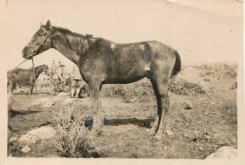 Light Horse photographs