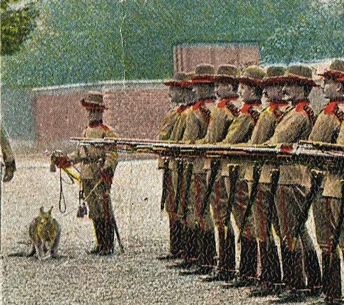 Click image for larger version.  Name:victorian mounted rifles pc detail.jpg Views:391 Size:140.3 KB ID:741203